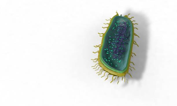 Bacterial structure model, background 3d render stock photo
