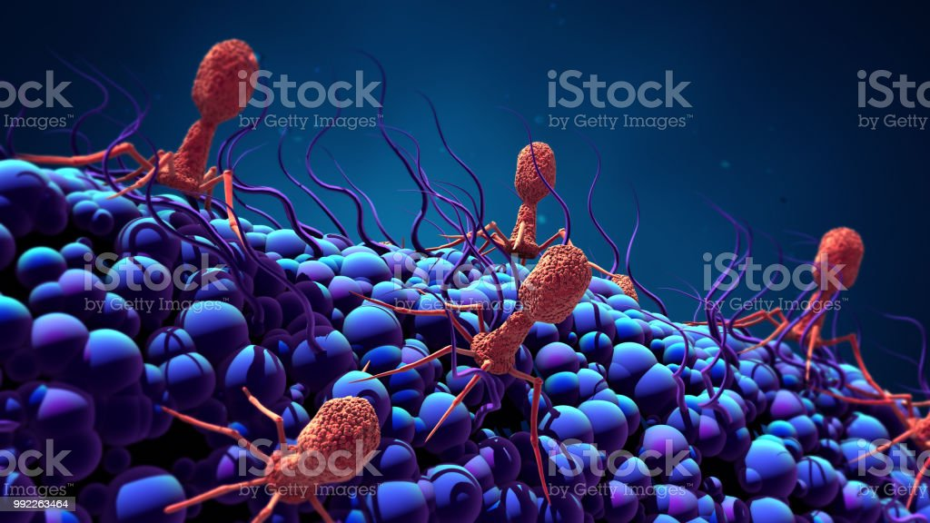 Bacteriophage infecting bacterium stock photo