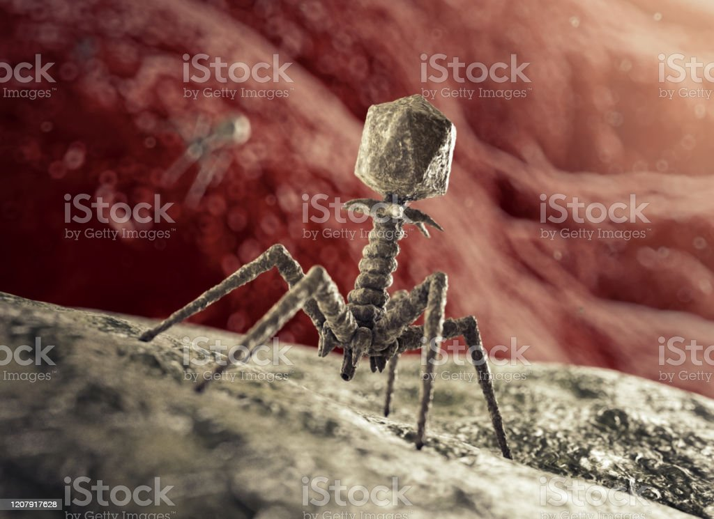 Bacteriophage Virus attacking Bacterium Phage about to inject a bacterium. (See my other images for pictures of coronaviruses). Modelled after an E. coli-T2-Bacteriophage or T4 Phage with all parts accurately represented: Head (containing DNA), Collar, Sheath, Tube, Baseplate with Spikes, Tail Fibres and Protein Needle. Bacteriophage Stock Photo