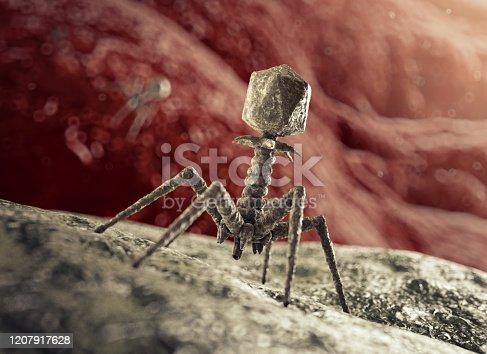 Phage about to inject a bacterium. (See my other images for pictures of coronaviruses). Modelled after an E. coli-T2-Bacteriophage or T4 Phage with all parts accurately represented: Head (containing DNA), Collar, Sheath, Tube, Baseplate with Spikes, Tail Fibres and Protein Needle.