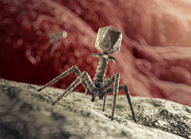 Bacteriophage Virus attacking Bacterium stock photo