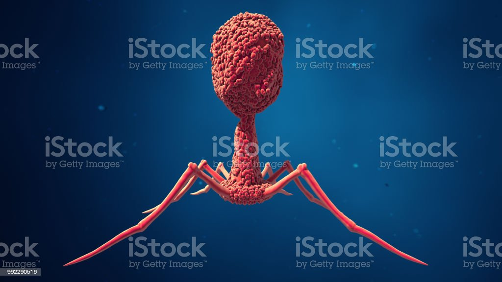 Bacteriophage virus stock photo