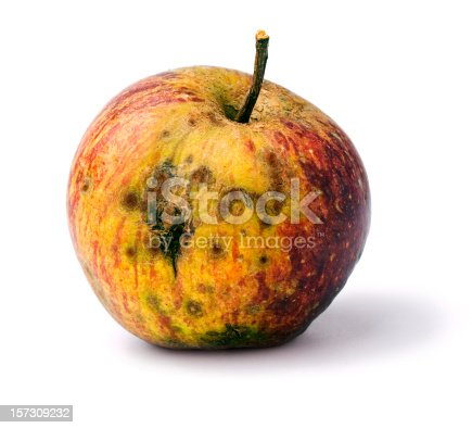 a rotting diseased apple