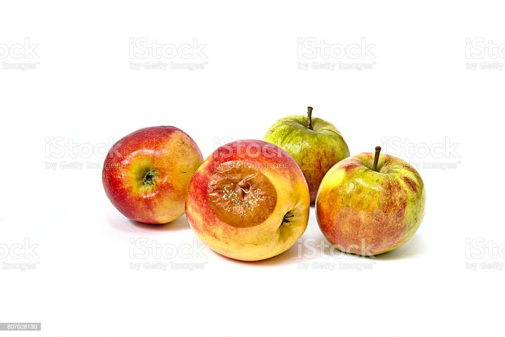 Bad apple with mold among edible apples stock photo