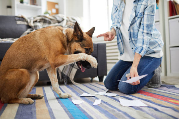 Bad Behavior Portrait of unrecognizable woman telling off dog for making mess at home, copy space scolding stock pictures, royalty-free photos & images