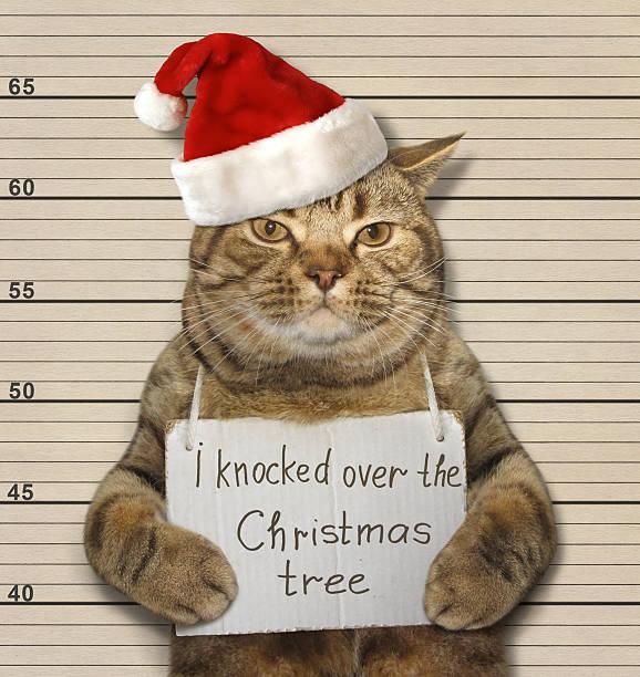 bad cat and christmas tree - katze weihnachten stock-fotos und bilder