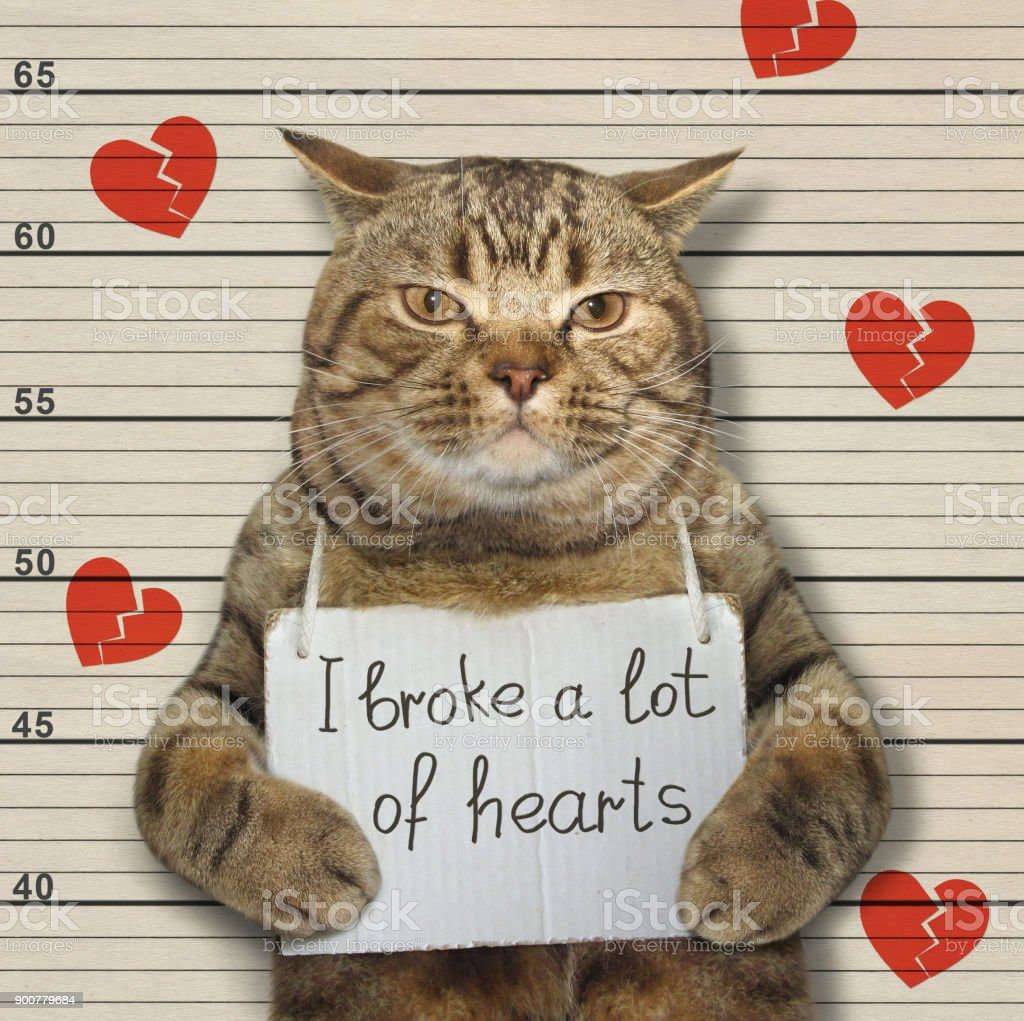 Bad cat broke hearts stock photo