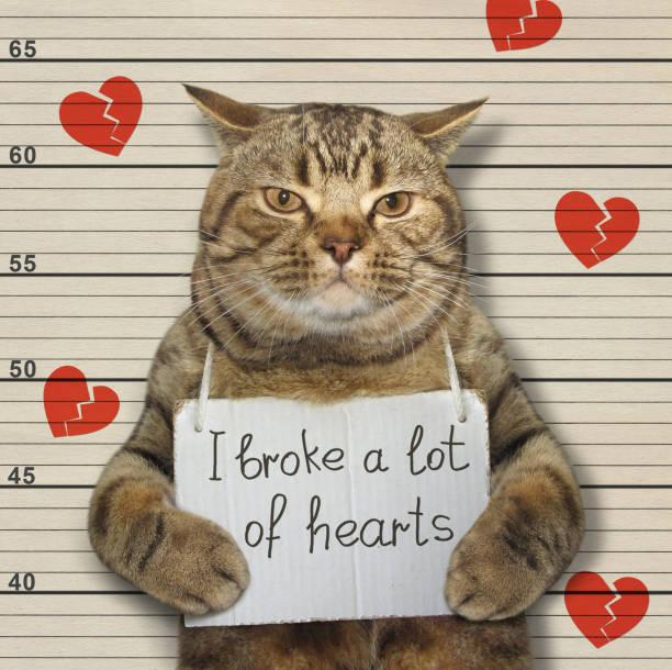 gato malo rompió corazones - feliz dia del policia fotografías e imágenes de stock