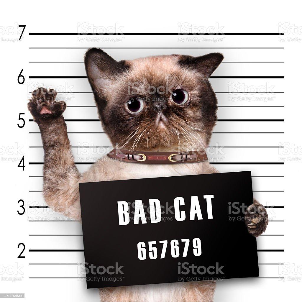 Bad cat. stock photo