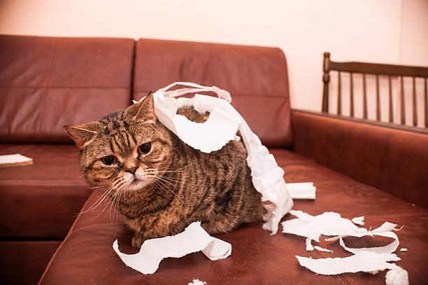 Bad cat stock photo