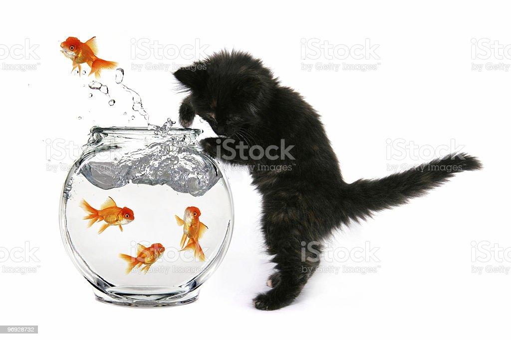 Bad Cat royalty-free stock photo
