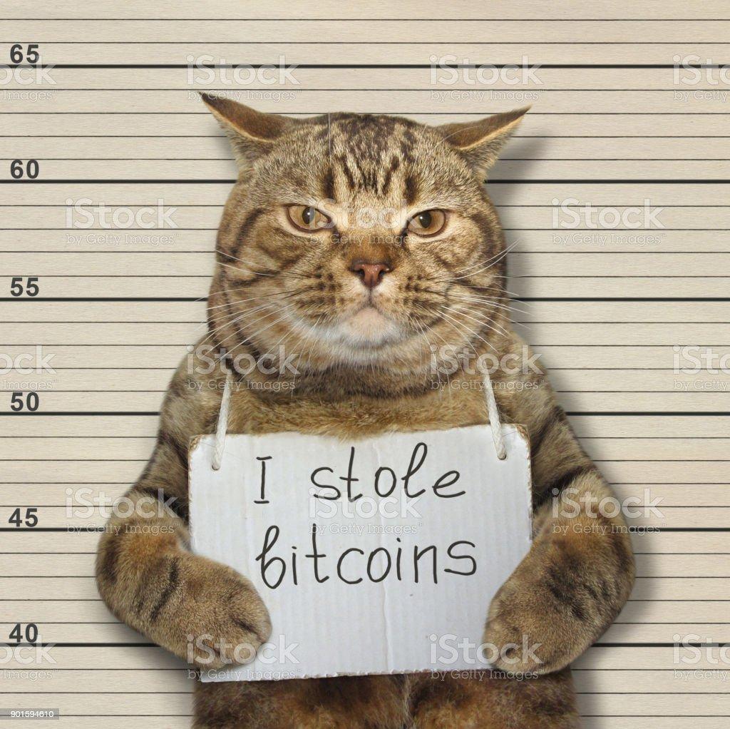 Schlechte Katze stahlen bitcoins – Foto