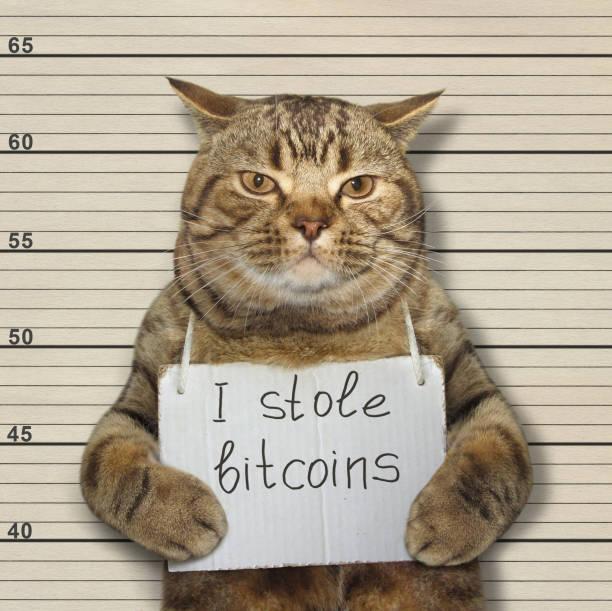Bad cat stole bitcoins stock photo