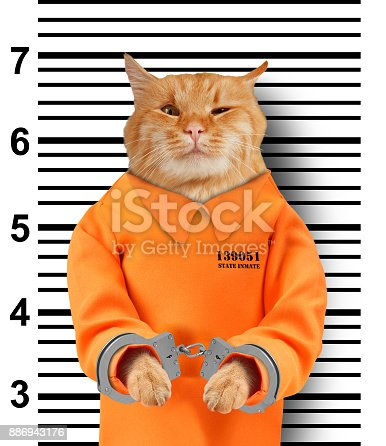 istock Bad cat with handcuffs on white background. Cat is wearing a orange jump suit. Violation of the law. 886943176