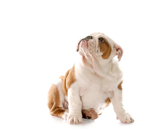 Bad dog picture id147701310?b=1&k=6&m=147701310&s=612x612&w=0&h=sjohqrzh8lsoucrfshmrctfqcydm kokkqqpdwi1z6m=