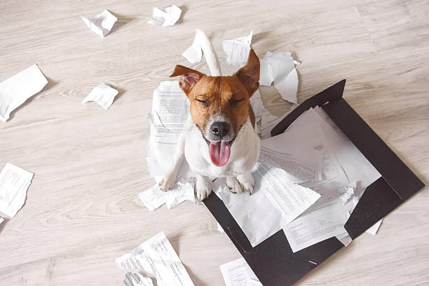 bad dog sitting on the torn pieces of documents - destruição imagens e fotografias de stock