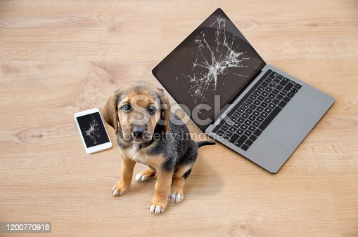 Bad dog sitting on the torn pieces of laptop and phone looking at camera.