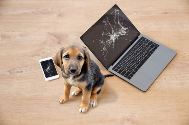 Bad dog sitting on the torn pieces of laptop and phone stock photo