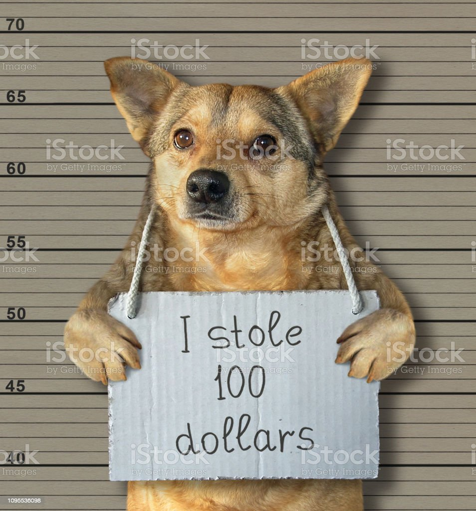 Bad dog stole 100 dollars stock photo