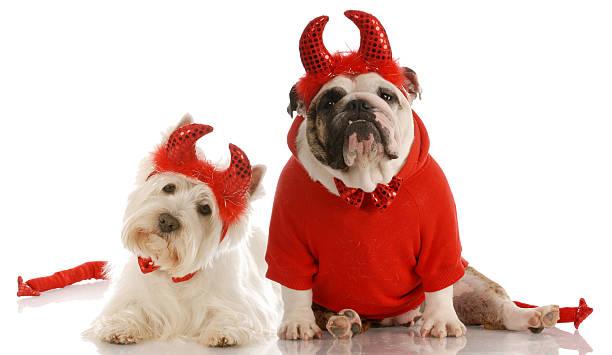 Bad dogs picture id149078545?b=1&k=6&m=149078545&s=612x612&w=0&h=kmesyuky4kcywb5 gvg3o1pxng cn lc8pg8sogifrm=
