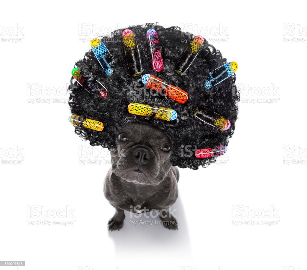 bad hairdo on dogs stock photo