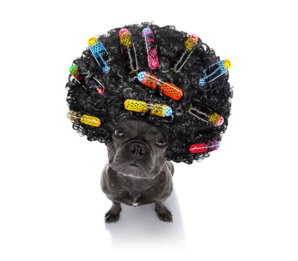 bad hairdo on dogs - messy hair stock photos and pictures
