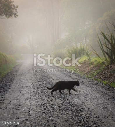 A black cat crossing the road