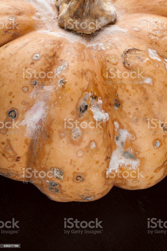 bad pumpkin stock photo