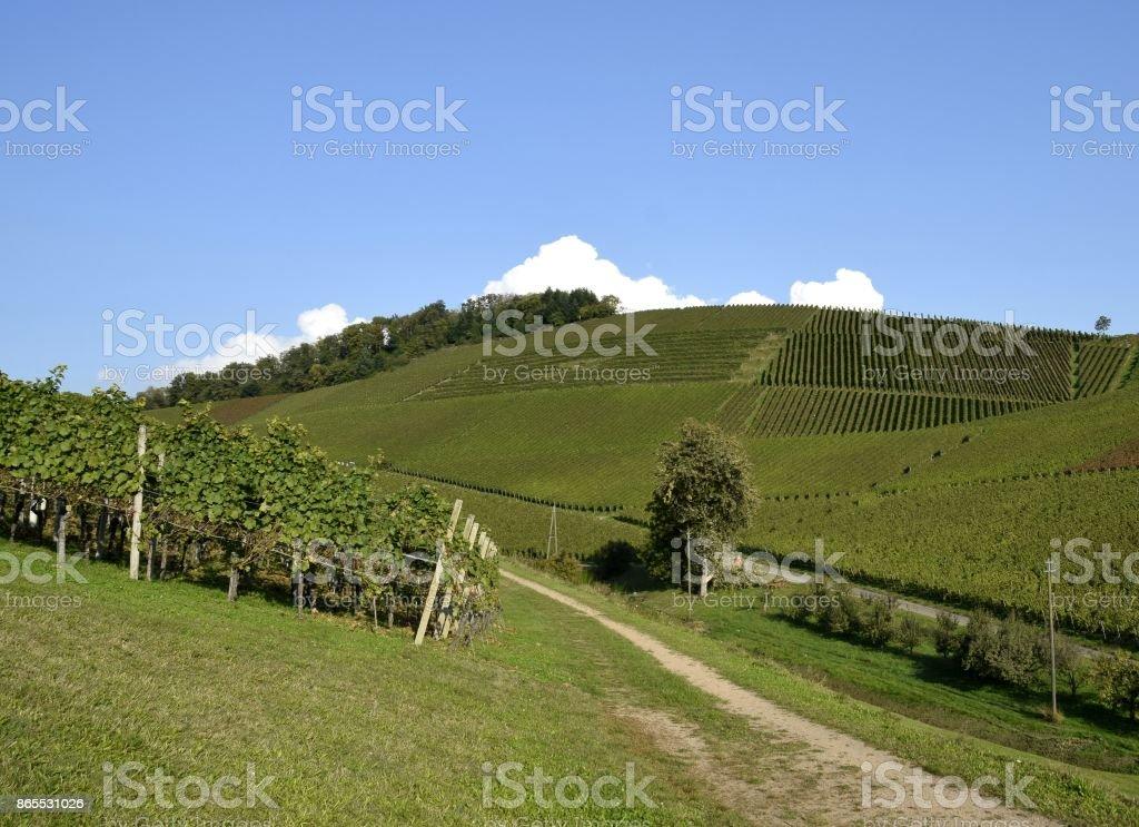 Baden vineyards stock photo