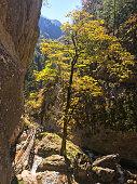 istock Baerenschuetzklamm - An autumn vibes in Baerenschuetzklamm in Austrian Alps. The area is lite up by sunbeams. Tall cliff of the gorge 1307029509