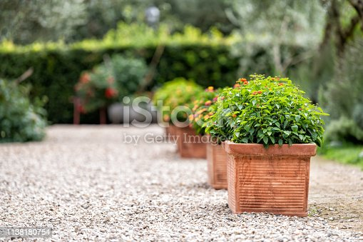 Bagno Vignoni, Italy town or village city in Tuscany and closeup of green flower decorations on summer day nobody architecture stones ground
