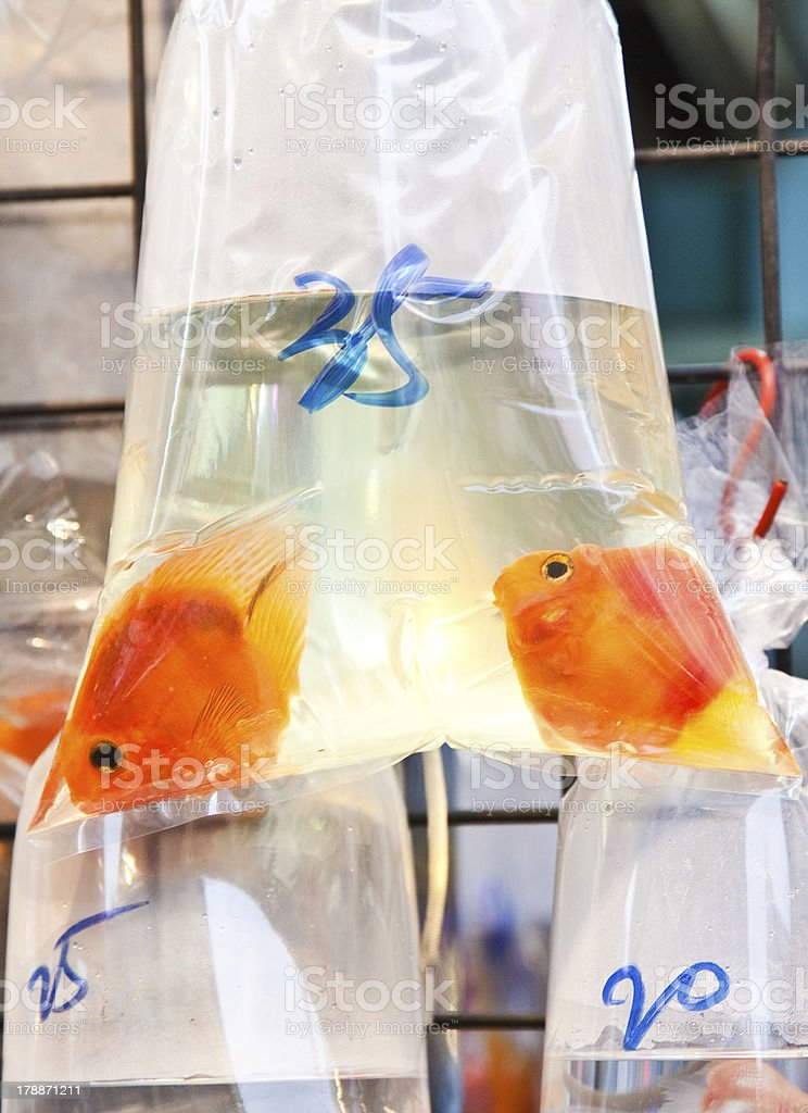 Bags of fishes for sale at a market royalty-free stock photo