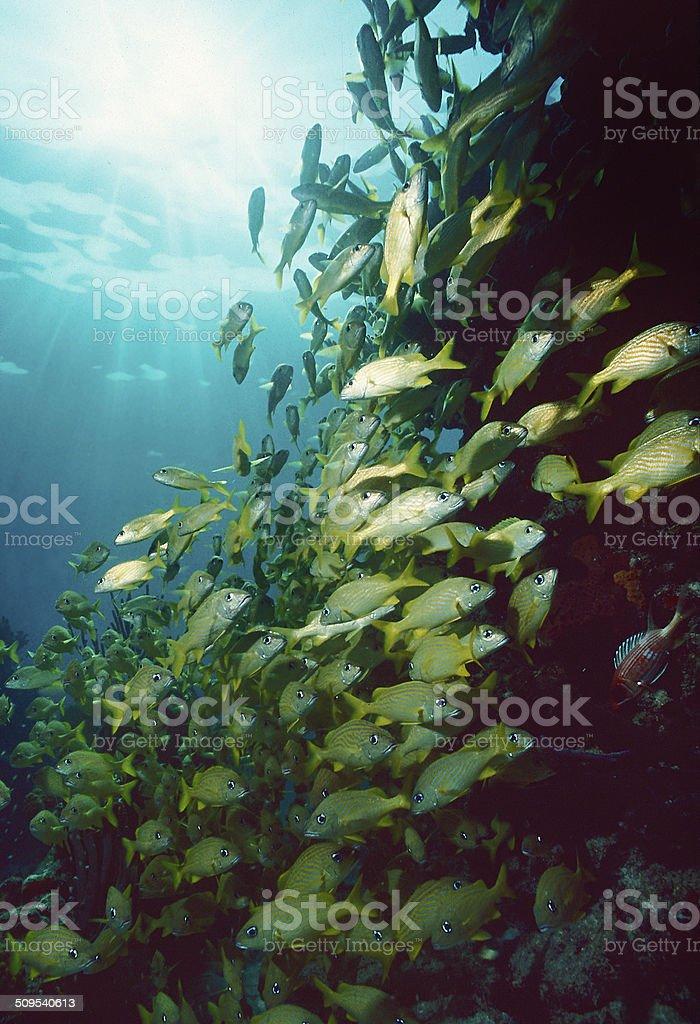 Bahama reef fish stock photo
