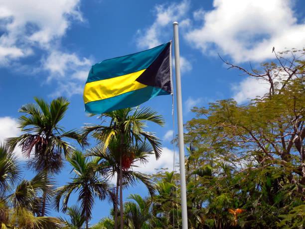 Bahamas Flag with Palm Trees stock photo