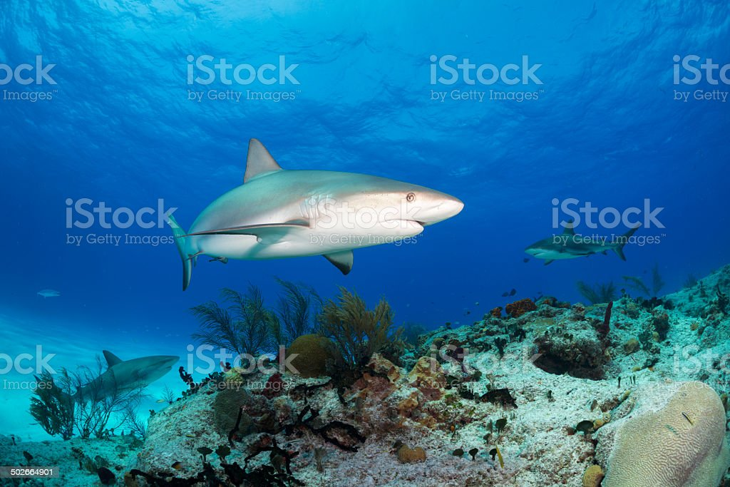 Bahamas resident stock photo