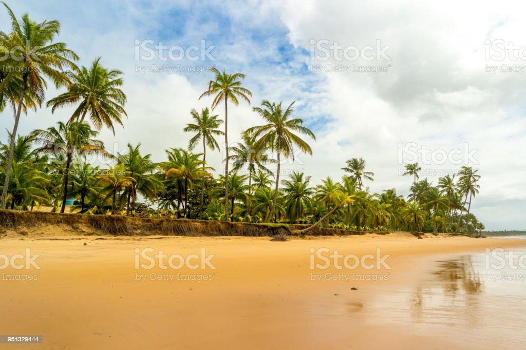 Strand von Bahia, Brasilien – Foto