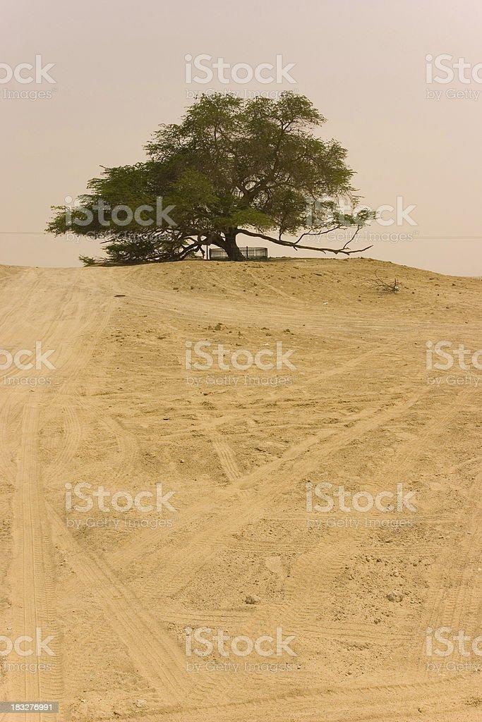 Bahrain tree of life royalty-free stock photo