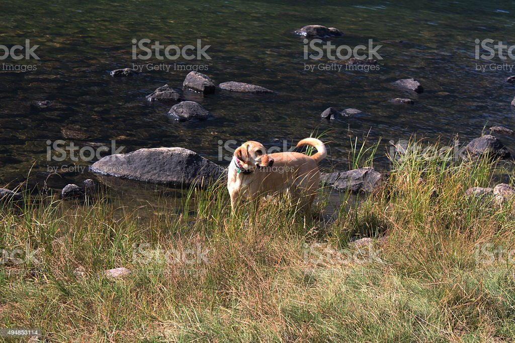 Bailey - Rosebud Lake stock photo