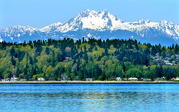 Bainbridge Island Puget Sound Mount Olympus Snow Mountain Washington State Bainbridge Island Puget Sound Mount Olympus Snow Mountains Olympic National Park Washington State Pacific Northwest Closeup Evergreen puget sound stock pictures, royalty-free photos & images