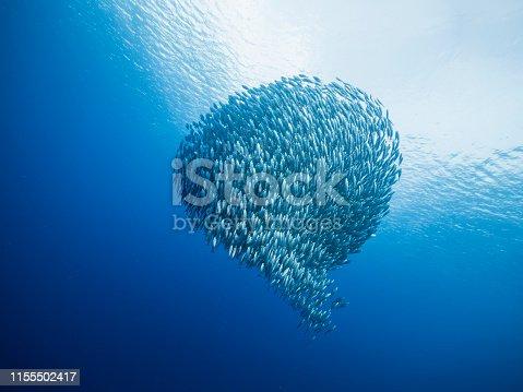 wide angel shot of bait ball at scuba dive around Curaçao /Netherlands Antilles