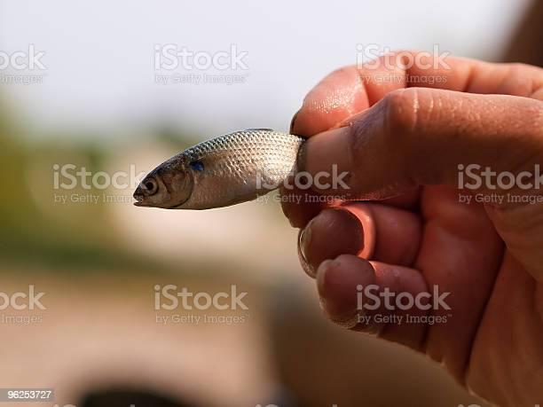 Foto de Iscas De Peixe e mais fotos de stock de Cavalinha - Peixe de água salgada