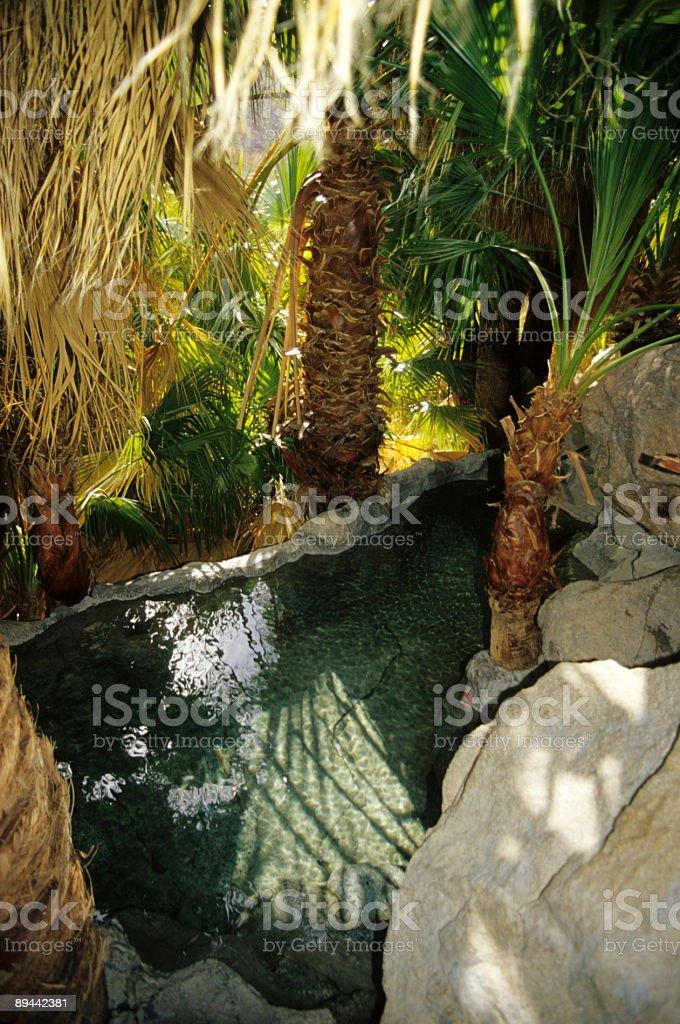 Baja California Oasis royalty-free stock photo