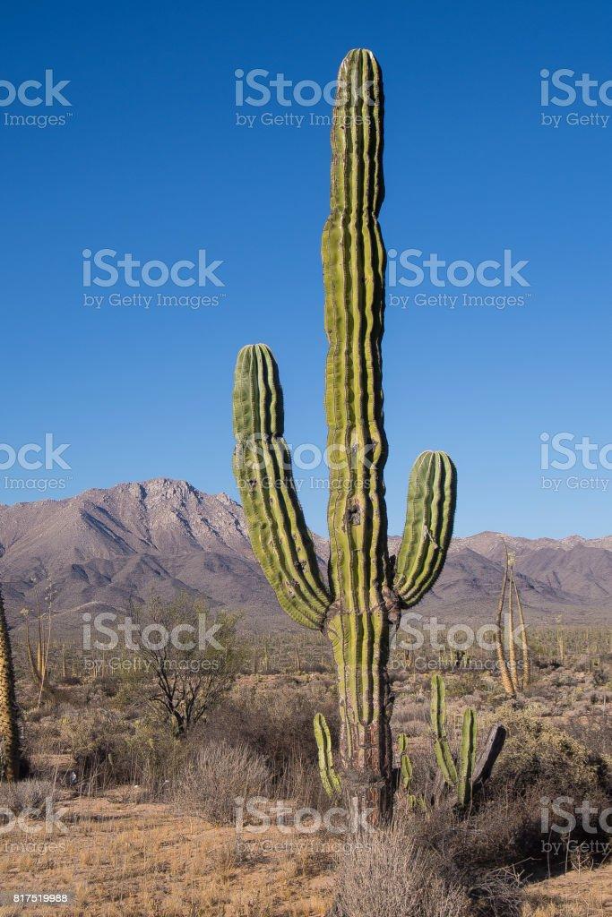 Baja California Sur - foto de acervo