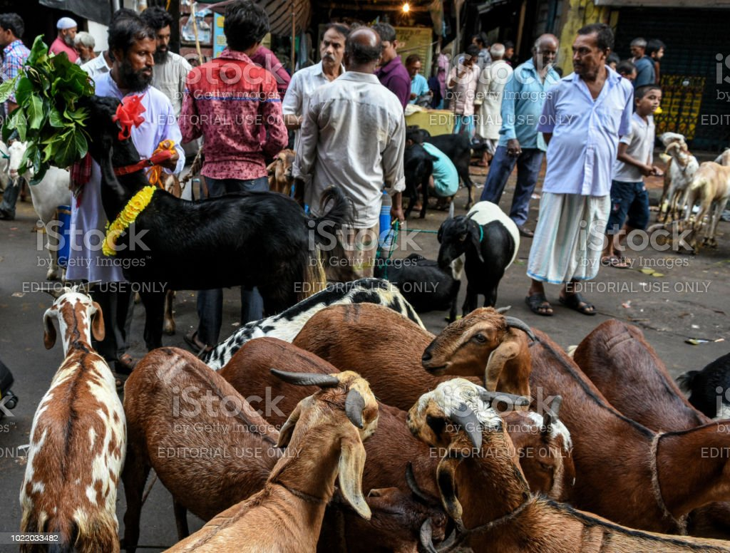 Bakra Eid Market Kolkata Stock Photo - Download Image Now