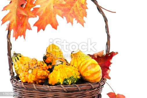 A bakset of colourful gourds in the autumn with coloured maple leafs.