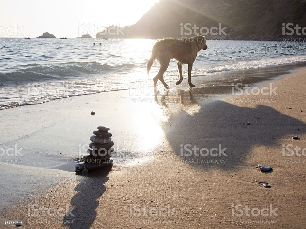 Balance, Stone, Rock, Spa Treatment, Beach, Water, Sea, Pebble, Dogs