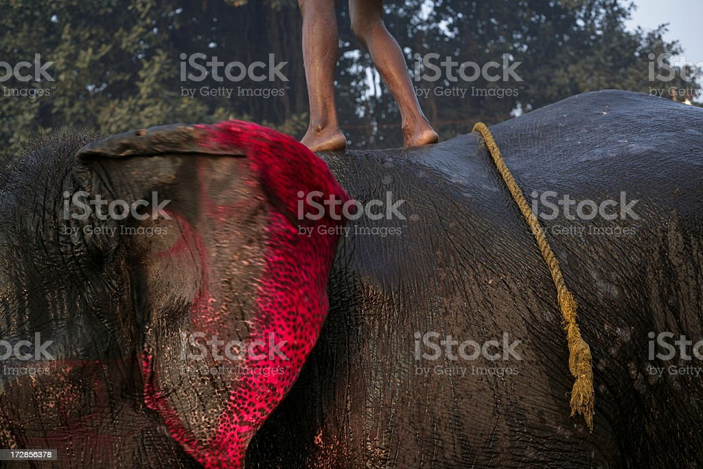 balance with the elephant royalty-free stock photo