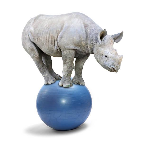 Balancing Nashorn. – Foto