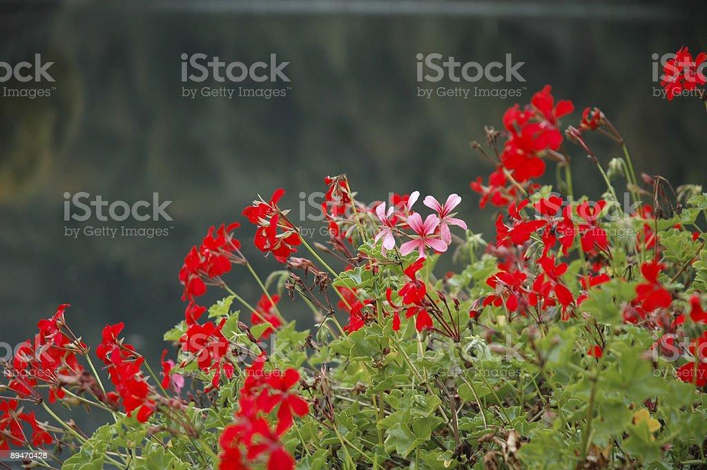 Balcón con flores foto de stock libre de derechos