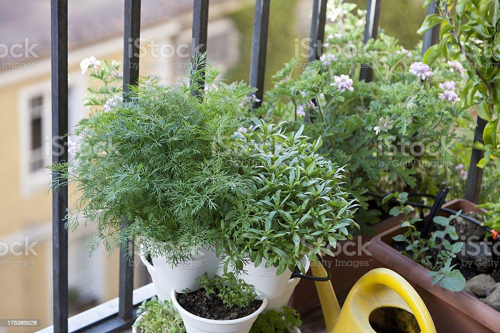 balcony garden royalty-free stock photo